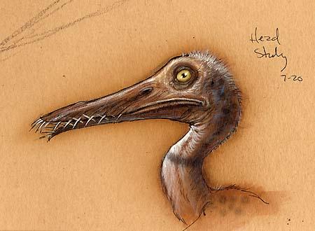 Rhamphorhynchus color study