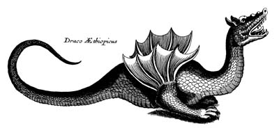 Draco Aethiopicus by E. Topsell, 1607